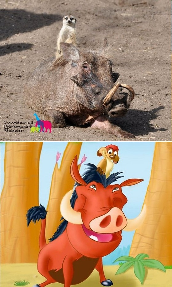Real-Life-Timon-and-Pumbaa-IRL