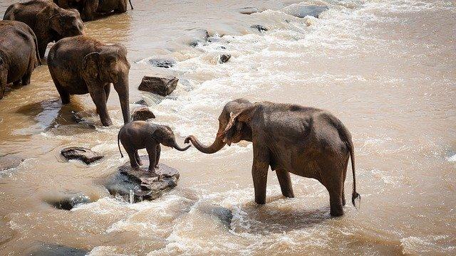 elephants-1900332_640