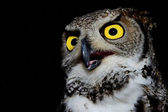 owl-1668274_640_e