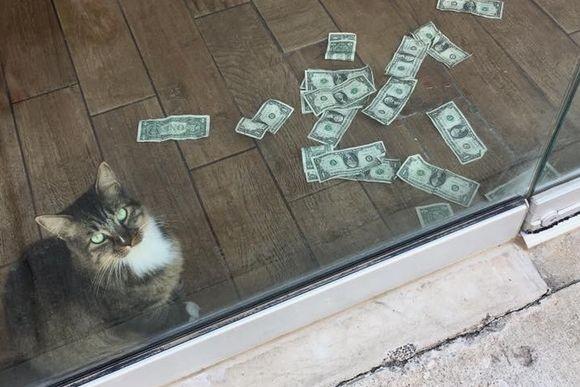 趣味は現金強奪、紙幣専門な。でもそのお金を社会に還元する義賊めいたところもあるオフィス飼いの猫(アメリカ)