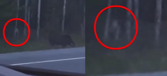 ゴラム?それともカオナシ?ヘラジカを捕獲しようと狙う謎クリーチャーが目撃される(カナダ)