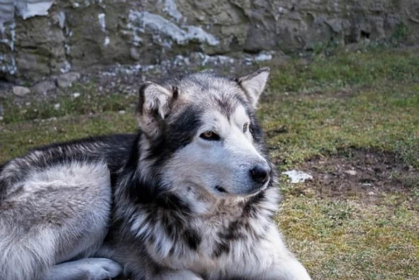 dog-1434343_640_e