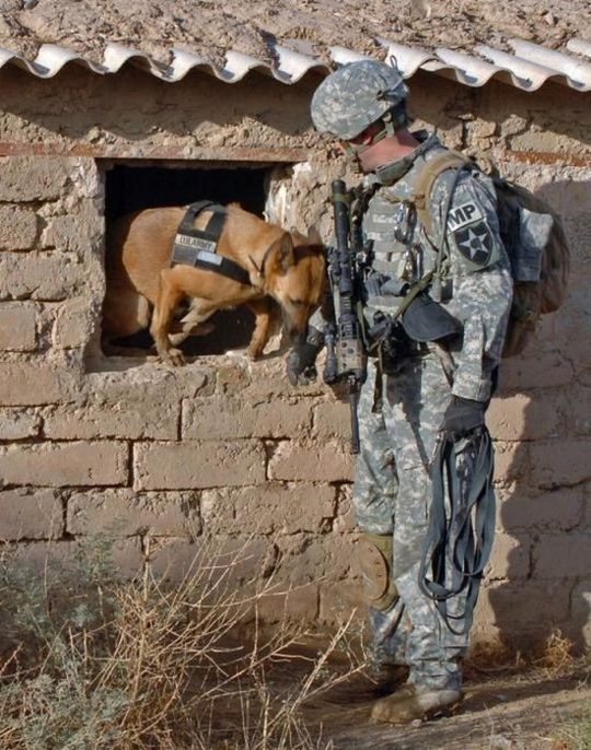 dogs_in_army_18