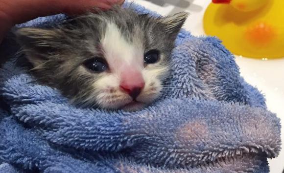 お母さんがいないの。生まれたばかりの子猫寂しさを埋めてくれたのは世話上手なおばあさん猫だった(カナダ)