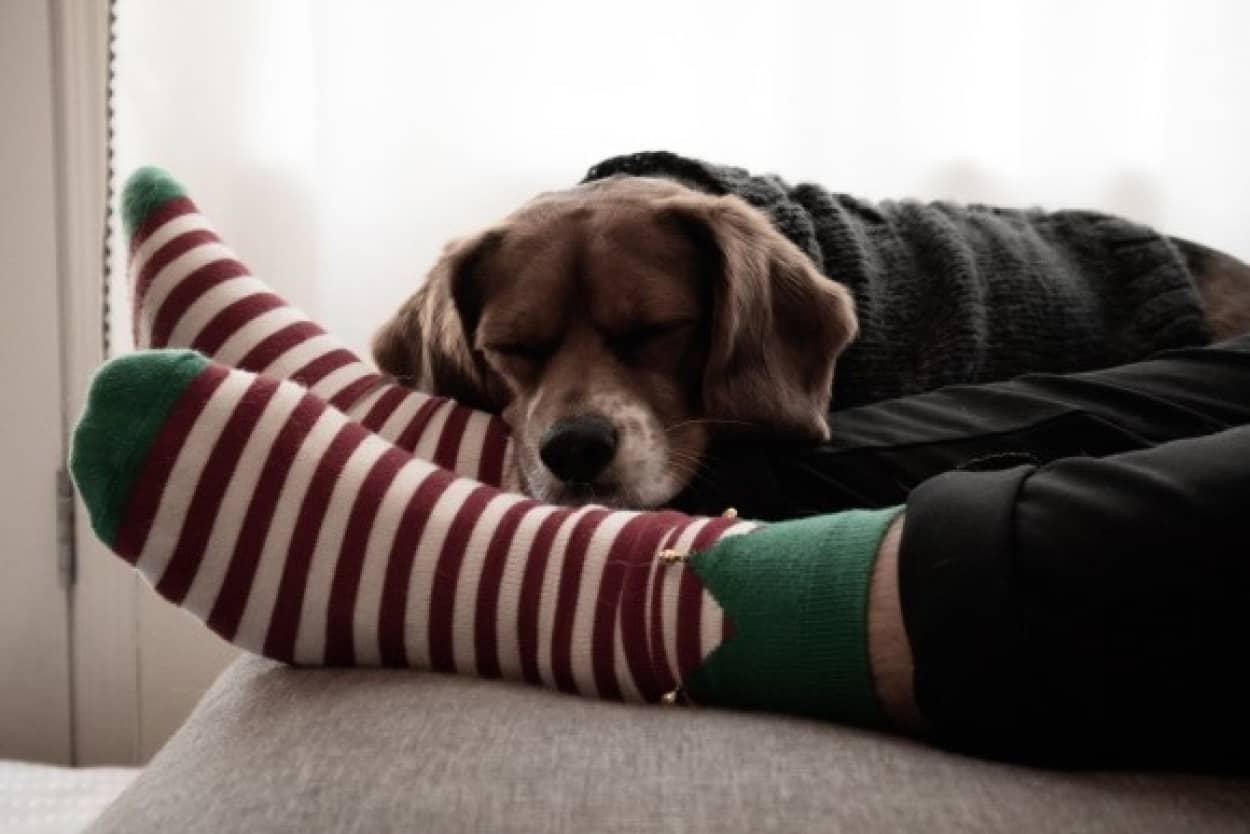 不要になった靴下から犬のベッドを作るプロジェクトが発足