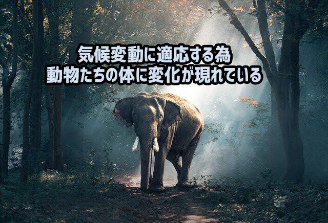 気候変動を乗り切るため、野生動物たちの体に変化が現れている