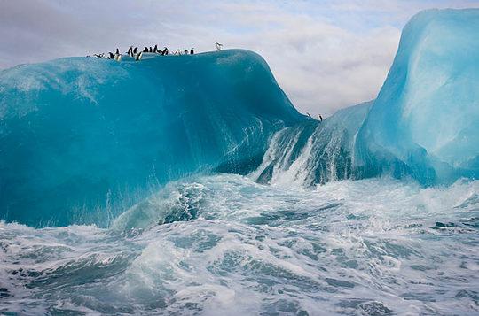 penguins_11