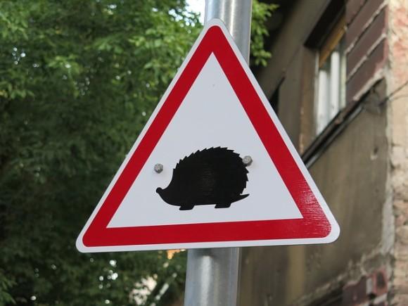 4hedgehogs-3700901_640_e