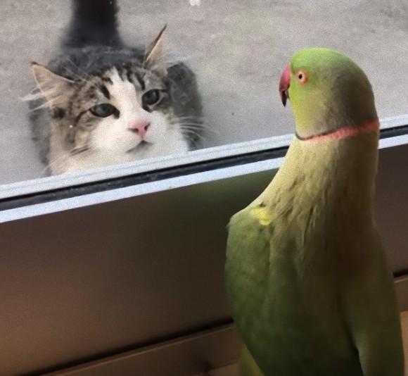 ちょっくら猫でもからかってみるか。窓越しから「いないいないばあっ!」を仕掛けるインコ