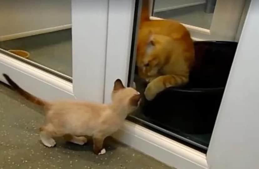 cat3e
