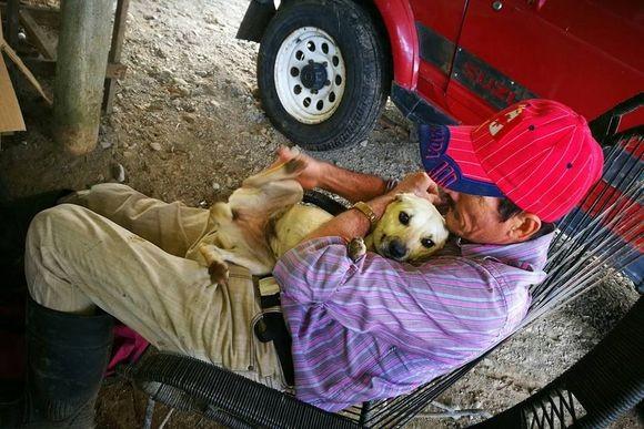 「私の飼い主を助けてあげて!」コスタリカの路上で車にひかれそうになりながらも必死に助けてくれる人を探し続けた犬