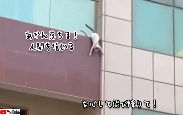3階のバルコニーから転落寸前の猫、人間たちの支えるシートに飛び込み無事救出