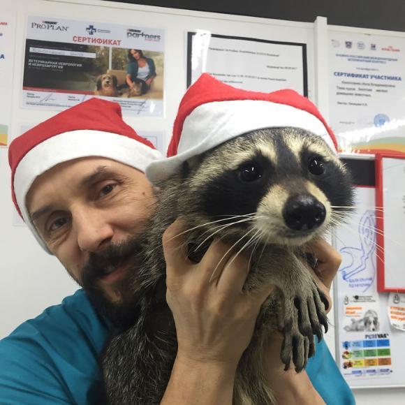 raccoon-8 [www.imagesplitter.net]
