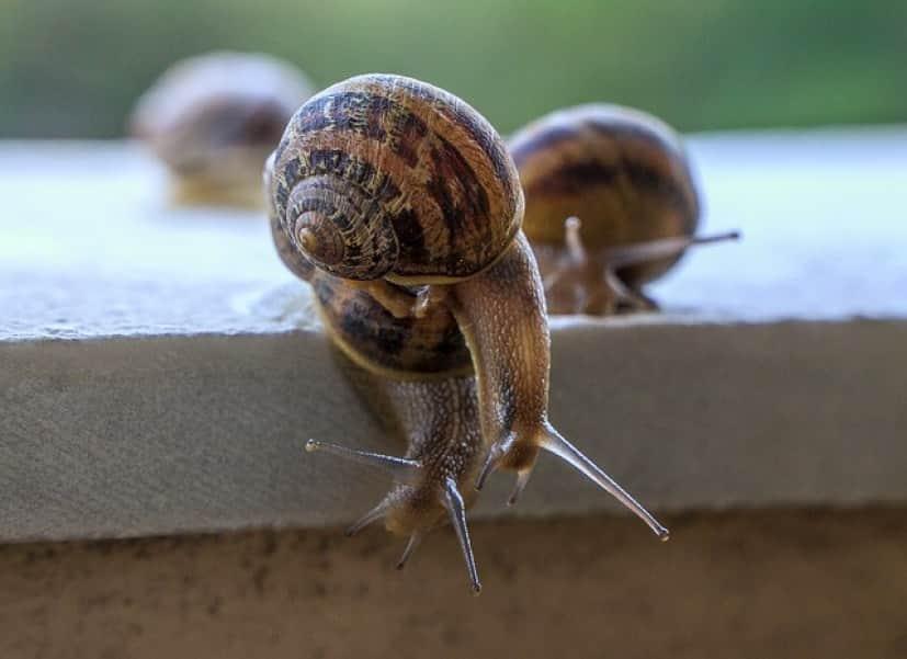 snails-4228196_640