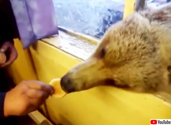 熊との社会的距離が近すぎるオンリーロシア。窓から顔を出す熊にお菓子をあげるスタイルが定着3連発