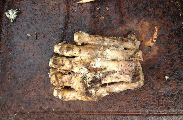 今度こそ?今度こそか?森の中で発見された巨大な謎の足(米 ...