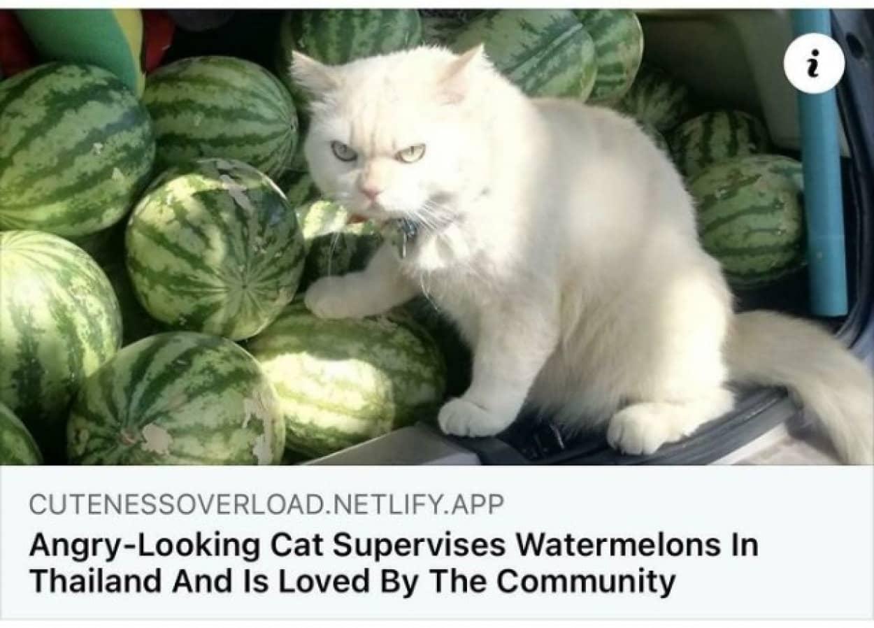 人の為に働く猫たち