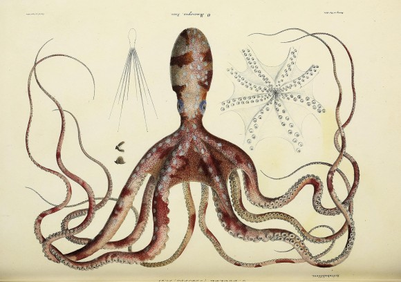 非常に興味深い。生物に関する世界の書籍の挿絵や図解など15万点以上が無料ダウンロード可能に