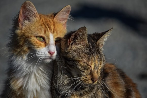 「猫は完全室内飼い」「吠える犬は撤収し飼い主を処罰」西オーストラリア州で新たな法律の導入を検討