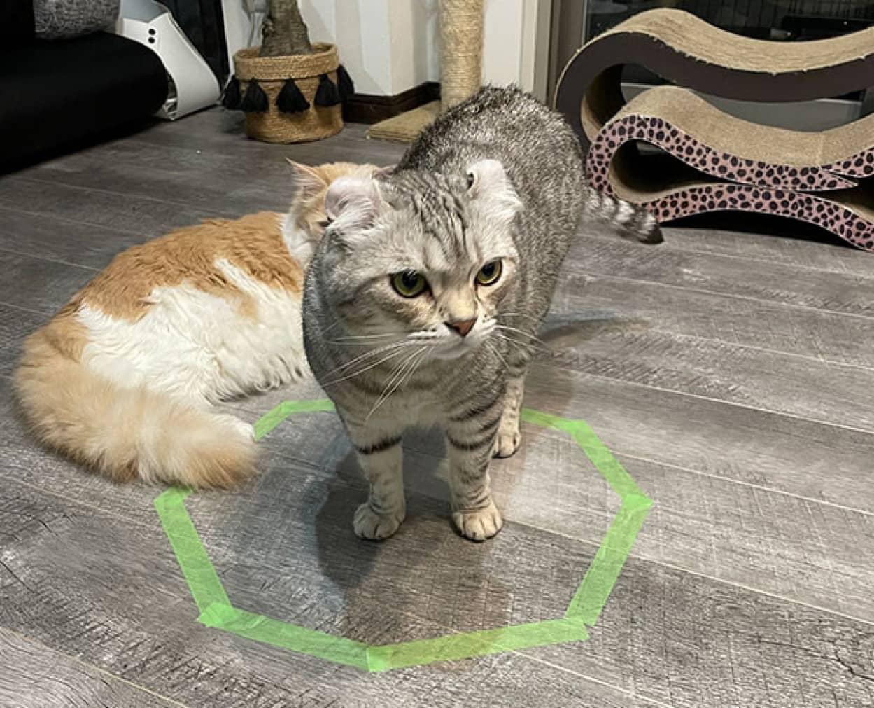 猫がテープを張っただけの四角い線の中にホイホイしてしまう理由