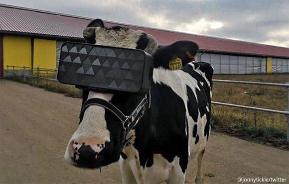 牛にVRゴーグルを装着、癒し効果でうつ病軽減と乳量増加を目指す試み(ロシア)