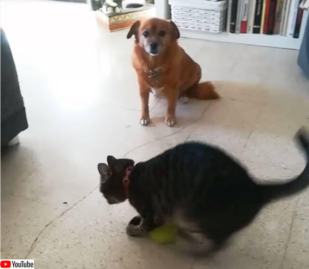 猫のボール遊び