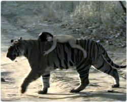 ジャングルブック トラ に対する画像結果