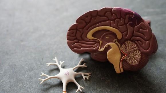 死後脳内で活動を開始するゾンビ遺伝子の存在が明らかに