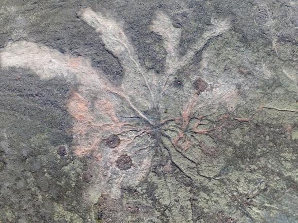 3億8500万年前、世界最古の森の化石が発見される(英米共同研究)
