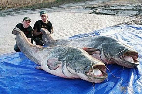 大きくなれよ・・・通常よりもかなりどでかい15の巨大動物たち