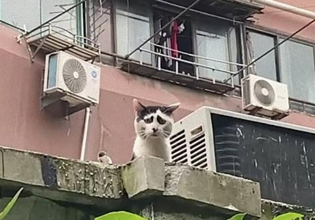 別に困ってませんけど?困り顔の猫にネットも困惑