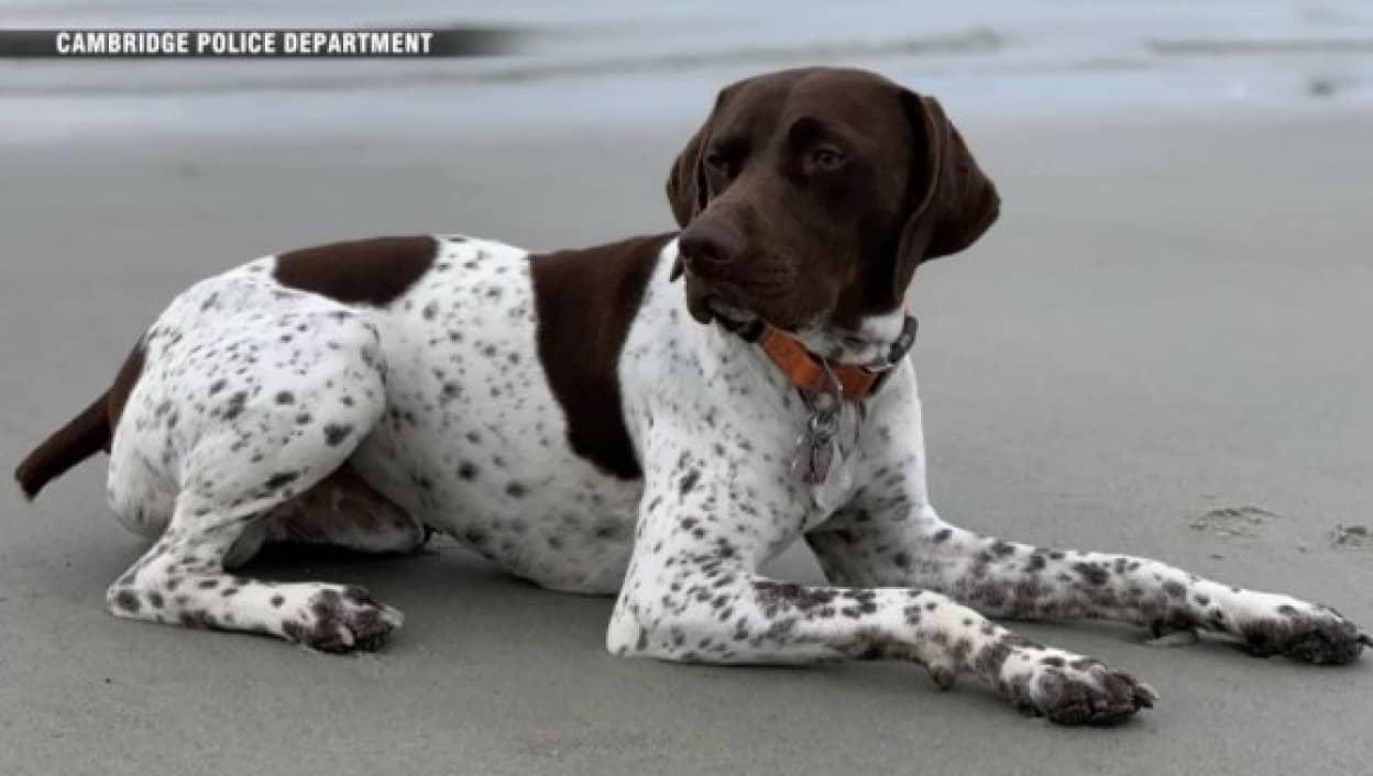 犬誘拐事件の犯人を偶然発見したテレビクルー