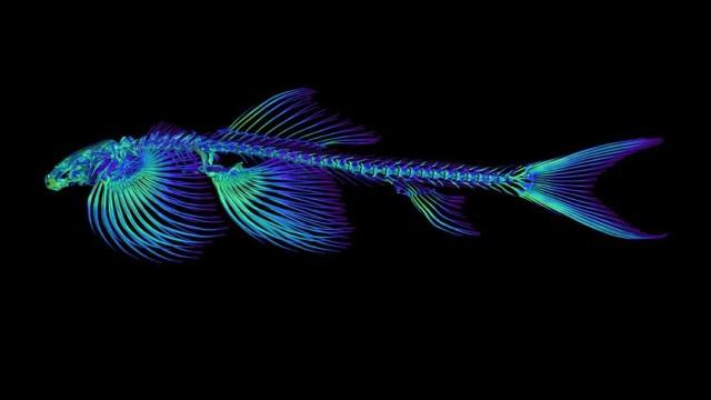陸上を歩くことができる魚が少なくとも11種