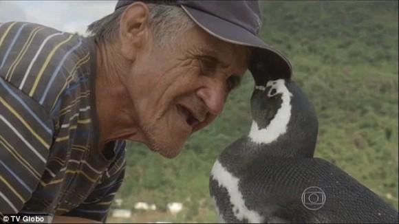 おじいさんに会いたくて。かつて命を救ってくれたおじいさんに会うために毎年やってくるペンギン