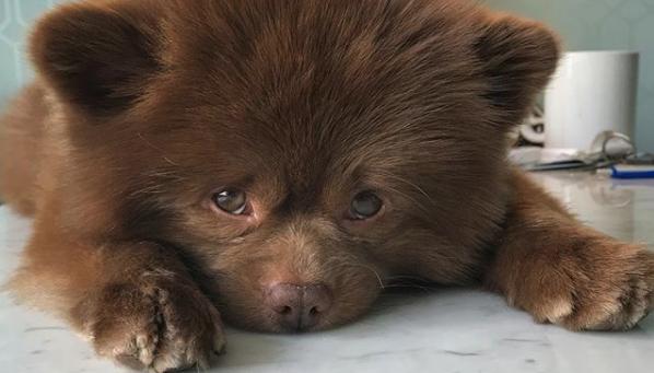 生後5か月になると売れない。という理由でブリーダーが放棄した犬が輝かしい第二の人生を歩むまで