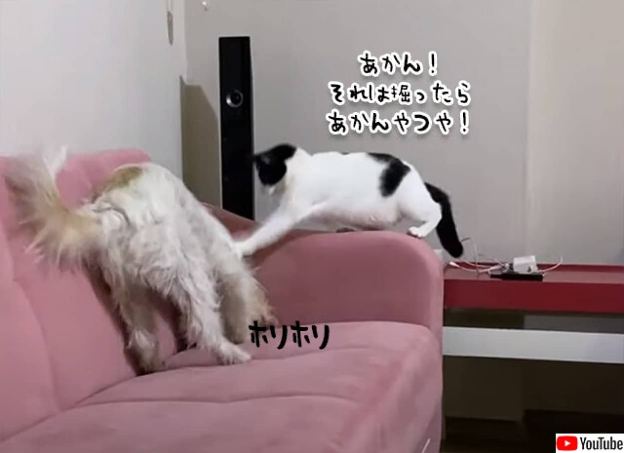 ソファーを掘る犬をたしなめる猫