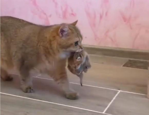 猫だって子育てするなら立派な家の方がいい。子猫を新居に運ぶお母さん