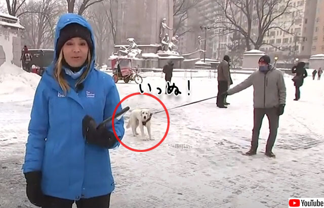 これはかわいい放送事故。お天気レポート中テレビ中継場所に居座ってしまった犬