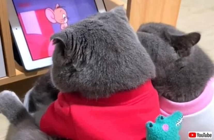 cartooncats3_640