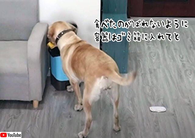 証拠は隠滅じゃ。冷蔵庫からアイスを盗み出し、食べた後は容器をゴミ箱に入れ完全犯罪をもくろんだ犬