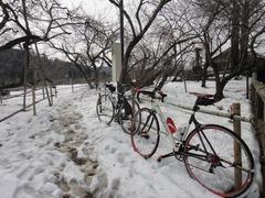 9吉野梅園雪