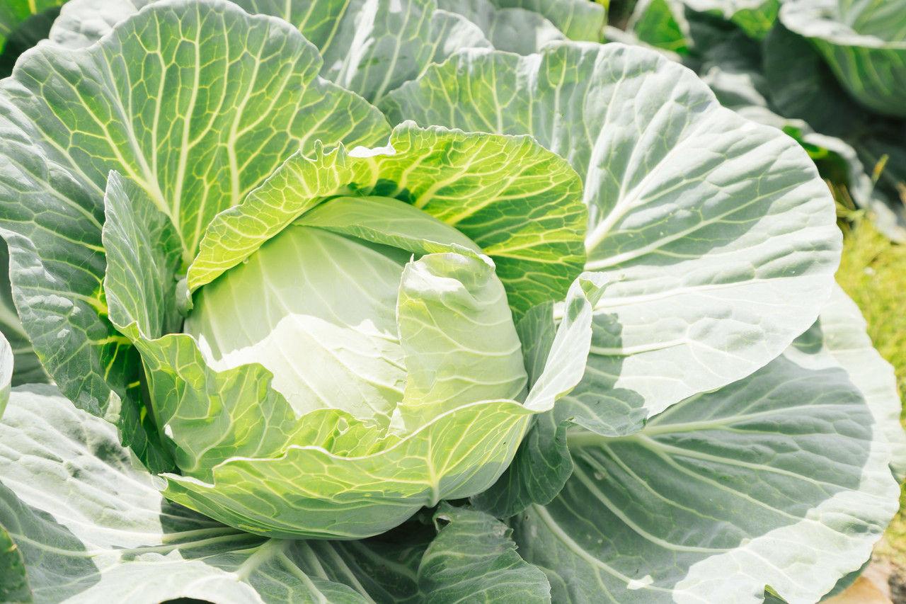 COOKPADで見つけた美味しい春野菜レシピ・2