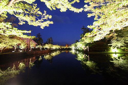 米沢城桜ライトアップ