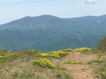 磐梯山 5月 ミヤマキンバイ