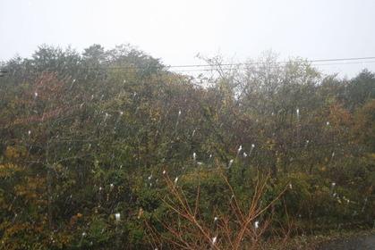 裏磐梯初雪