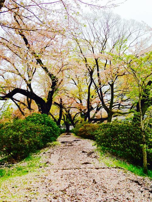 桜色のさんぽみち*