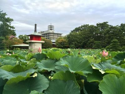 新潟市内散策&マリンピア日本海