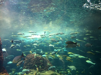 新江ノ島水族館に行ってきました