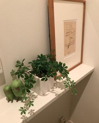 フェイクに見えない観葉植物
