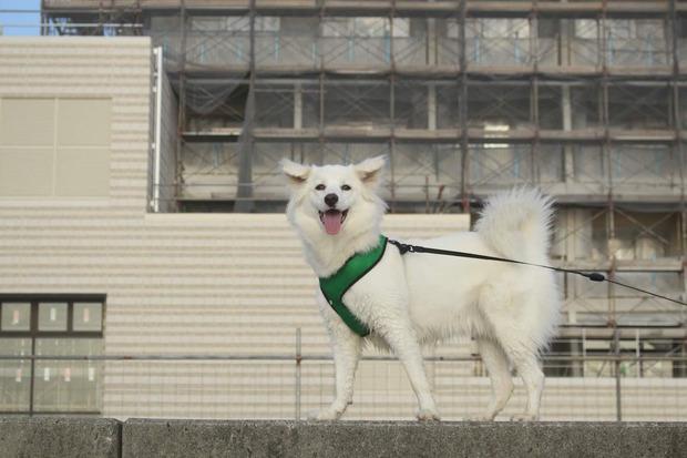 【朗報】犬がかわいくて困ってる